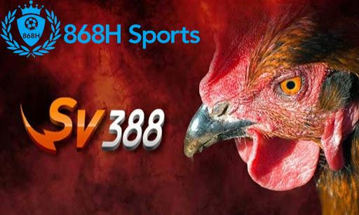 Tại sv388 các trận đấu được diễn ra liên tục